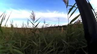 Охота на фазана с бретонским эпаньольом