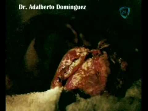 ¿Extraterrestre en Huehuetoca?, programa La Sobremesa