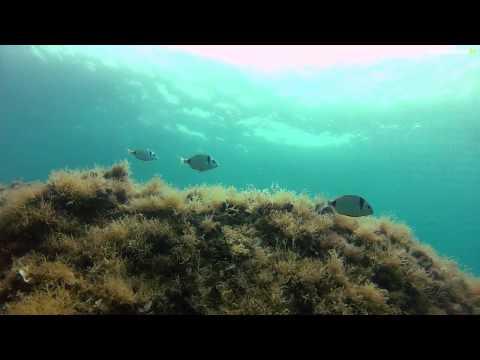 Chercheurs du bout du monde : biologiste marin en Grèce