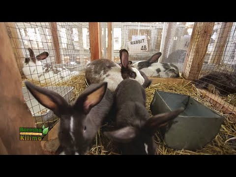 Art Of Rabbit Farming   Boresha Kilimo