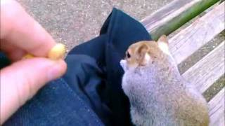 London - feeding squirrels and other
