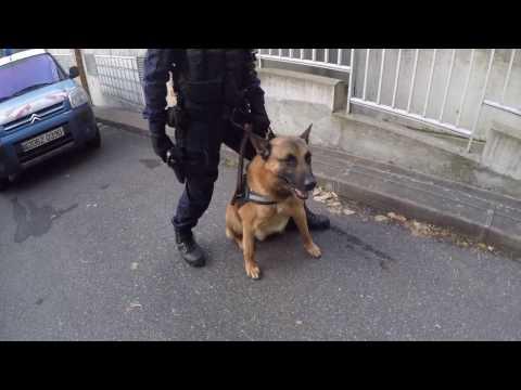 Mannequin Challenge - Gendarmerie des Yvelines