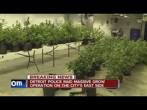 Detroit police bust illegal marijuana grow operation