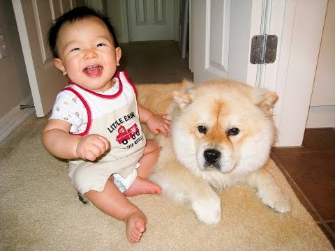 Baby making interesting conversation with dog Part 2 – Dog making baby LOL!
