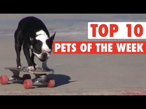 Top Pets of the Week: Most Epic Pets || Nov 6, 2015