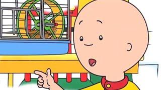 Caillou en Français - Caillou et le Hamster   dessin animé en francais   conte pour enfant