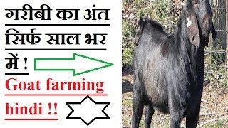 गरीबी का अंत सिर्फ साल भर में ! GOAT FARMING IN HINDI ! osmanbadi goat! बकरी पालन से लाभ !