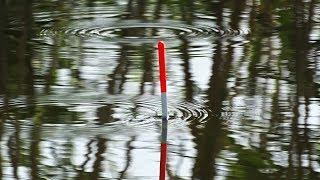 Ловля карася в августе с лодки. Рыбалка на маховую удочку. Поклёвки карася и линя крупным планом.