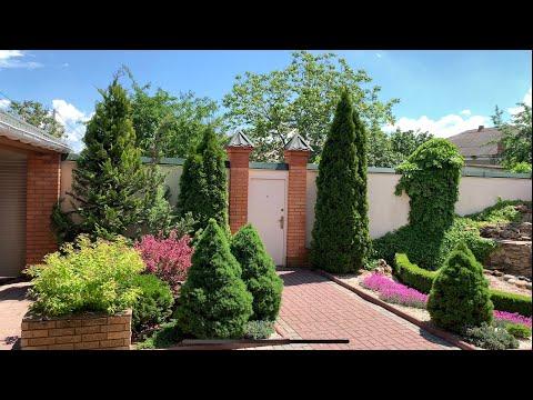 Вопрос: При помощи каких растений создать тропический контейнерный сад?