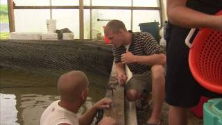 Maryland Indoor Shrimp Farm - America's Heartland