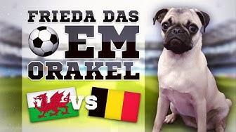 WALES gegen BELGIEN » FUSSBALL ORAKEL FRIEDA » EM 2016 EURO 16 WAL BEL Viertelfinale