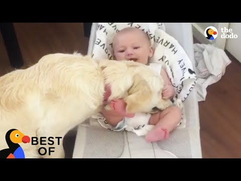 Animal Videos That Will Make You Happy: Funny & Cute Animals 2018 | Best of The Dodo