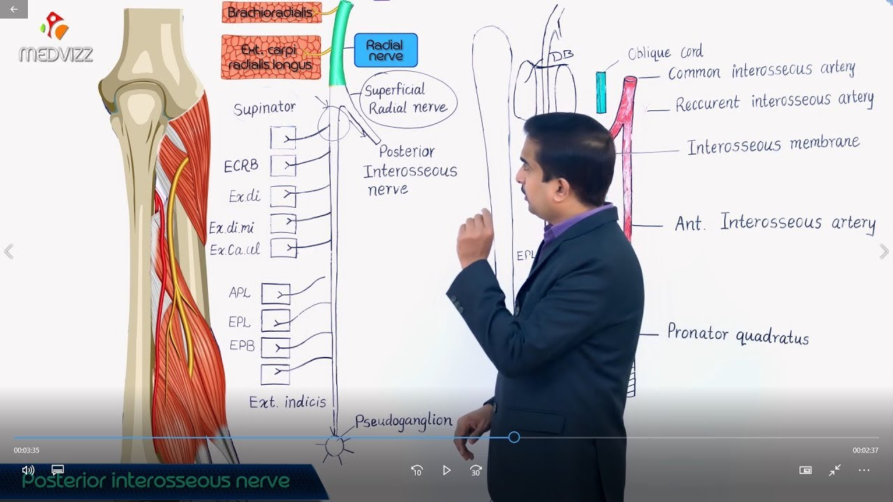 The Posterior Interosseous Nerve Medvizz Medical Animations Youtube