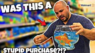1 Gallon Starter Kit Fish Tank!