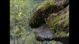7 чудес Красноярского края: Столбы(Фильм снят в рамках проекта