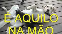 """LUIZ ALEXANDRE """"O BICHINHO DA MULHER"""" GATINHA SAFADA CAIU NA NET."""