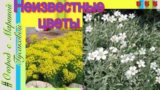 78). 24.05.2017-#Неизвестные цветы...Кто знает их название?