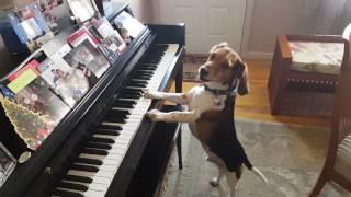 Buddy Mercury Sings & Plays Piano!!!