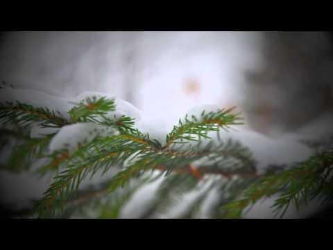 Franciszkańskim okiem 8 - Zimowe róże