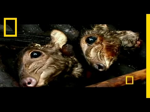 Gabon: The Last Eden | National Geographic