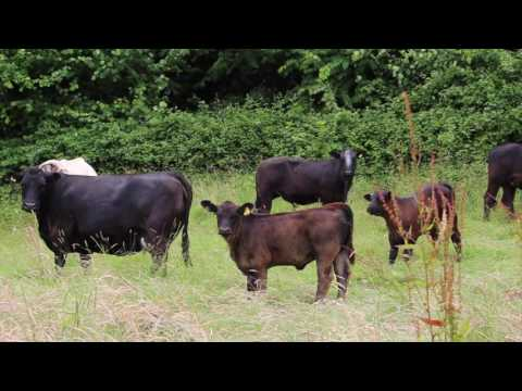 Rebuilding soil with livestock: one farmer's story