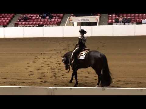 2017 AQHA Congress Horsemanship Finals