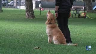 Cosa fare e non fare se un cane aggredisce, i consigli dell'esperto