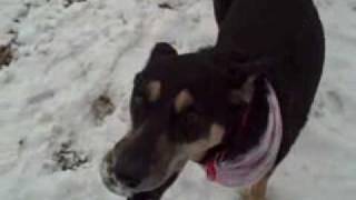 *adopted* Daisy Boulder Humane Society Adoption