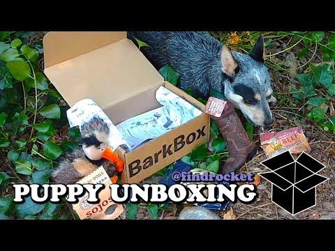 Puppy Unboxing #11 - Barkbox Western