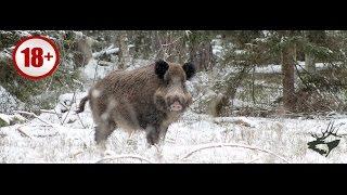 СУПЕР ОХОТА НА КАБАНА С АВТОМАТОМ 2016. Лучшие моменты из охоты. Wild boar hunting/ Часть 3