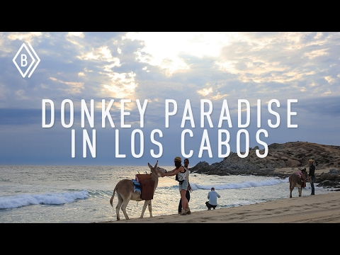 An unusual donkey safari from the desert to the sea in Cabo. - EP 4/4