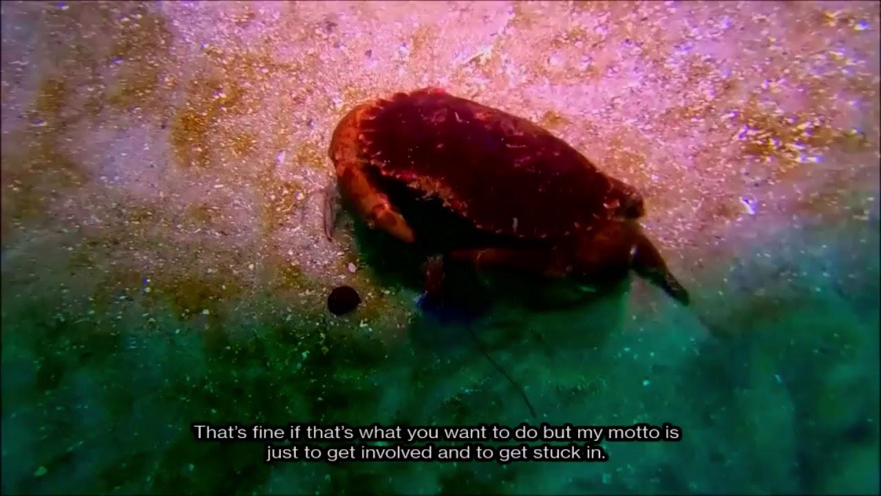 [Film] Under the Waves in Monterey