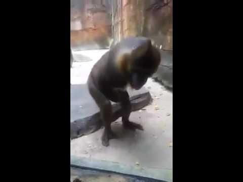 the monkey spank Life