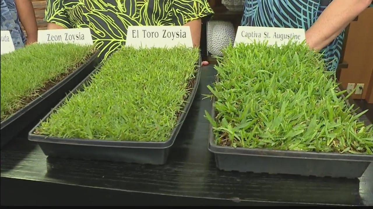 Hawaiian Turfgrass Love Your Home Youtube