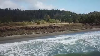 Community In Fastest-Eroding Place On West Coast Fights To Save The Shoreline | NBC Nightly News