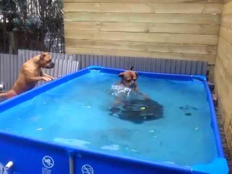 Due cani troppo intelligenti... Guardate che astuzia!