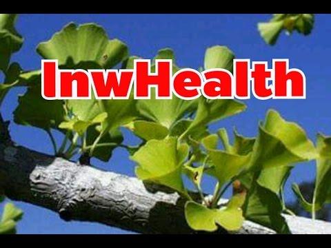 แปะก๊วย (Ginkgo, Ginkgo biloba) ประโยชน์ของใบแปะก๊วย 13 ข้อ ! [lnwHealth]