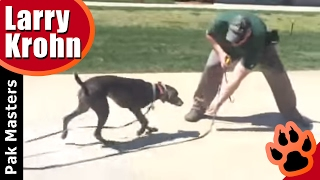 One week board and train with Weimaraner puppy thumbnail