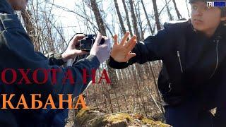 Необычная охота на кабана   С русским необычным охотником