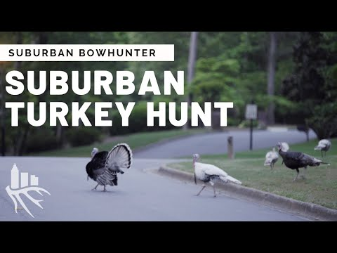 Suburban Bowhunter: Georgia Turkey