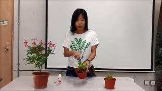 Publication Date: 2019-02-11   Video Title: Common Study - Video 2