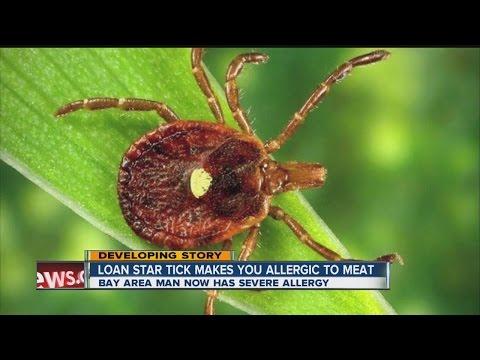 Lone star tick can make you allergic to meat