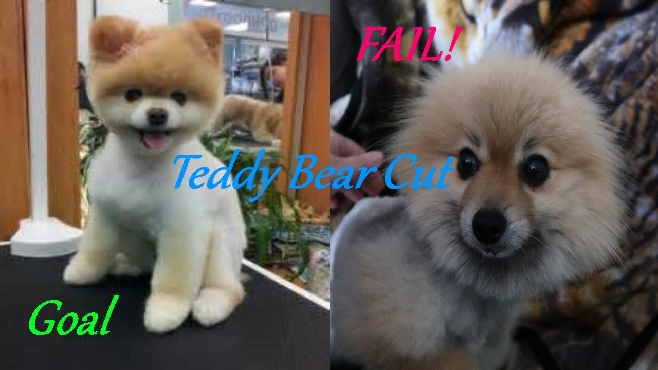 Ganz und zu Extrem failed teddy bear pomeranian cut :( - YouTube #ZU_52