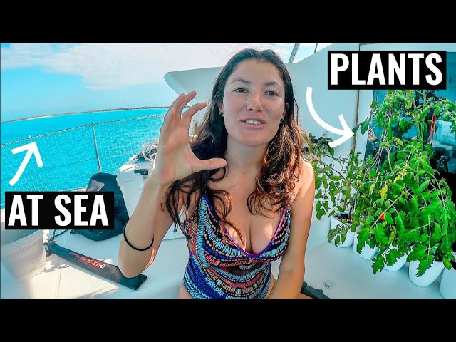 SIMPLE LIFE AT SEA | Plant Haul On Off Grid Living Catamaran Ep. 67