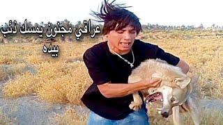 عراقي لديه ذئاب مفترسة معلومات تشوفك العجائب