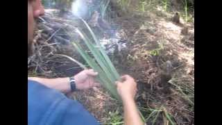 Natural Cordage Using Sabal Palm Fronds