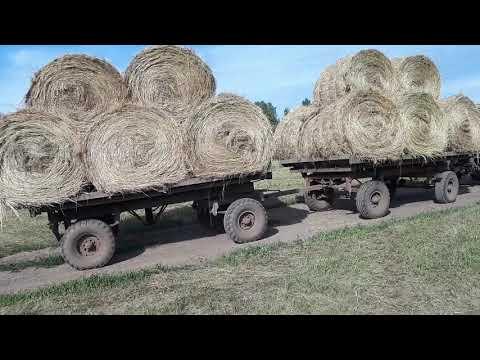 Вопрос: Какие нужны документы на перевозку сена?