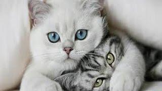 Самые крутые, веселые и прикольные котики, cats, коты.  FUNNIEST CATS HQ
