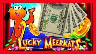 I TRIGGERED THE BONUS ON A MASSIVE BET! BIG WINS! Lucky Meerkats Slot Machine