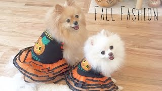 Puppy Fall Fashion Show Lookbook